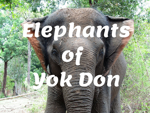 elephants yok don national park vietnam