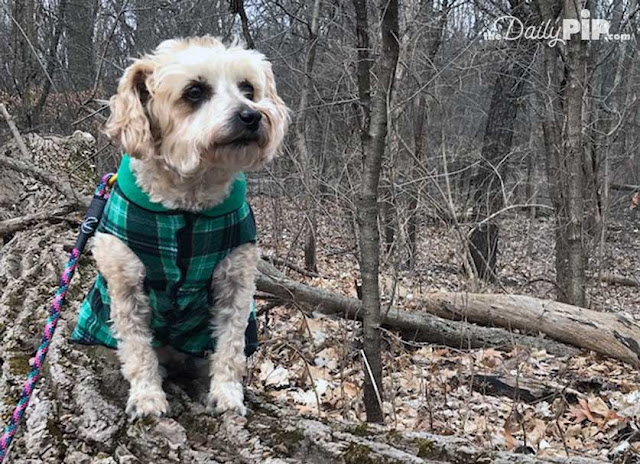 Ruby walks in the woods and hopes spring will arrive soon