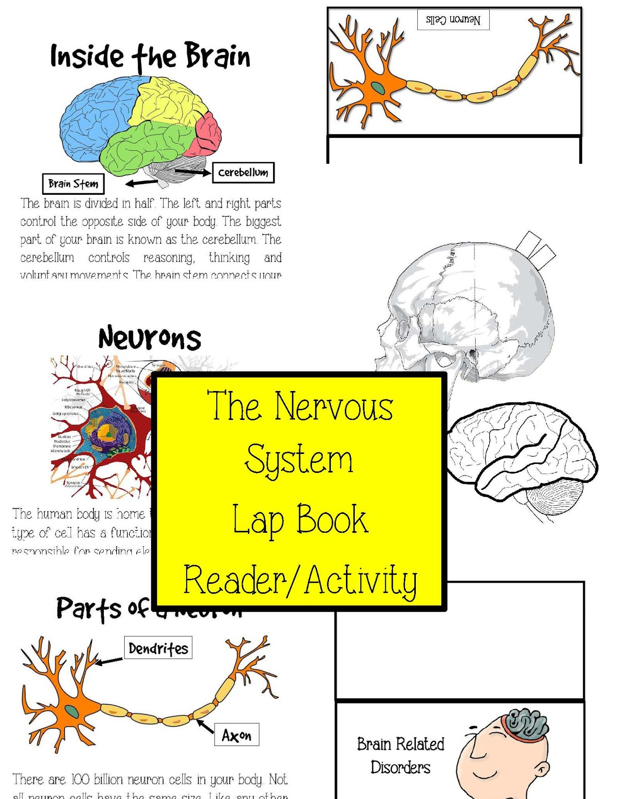 The Hermit Crabs Homeschool Human Body Nervous System