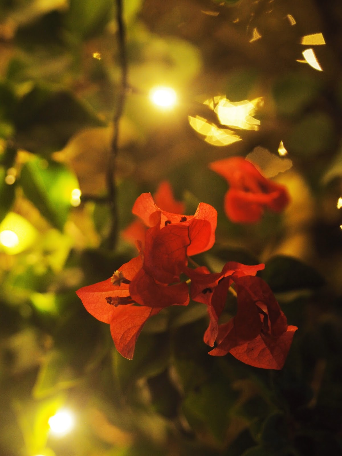 Tropical Flowers with Fairy Lights in Background