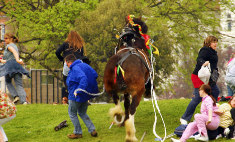 Rampaging horse breaks loose at count show injuring eight people