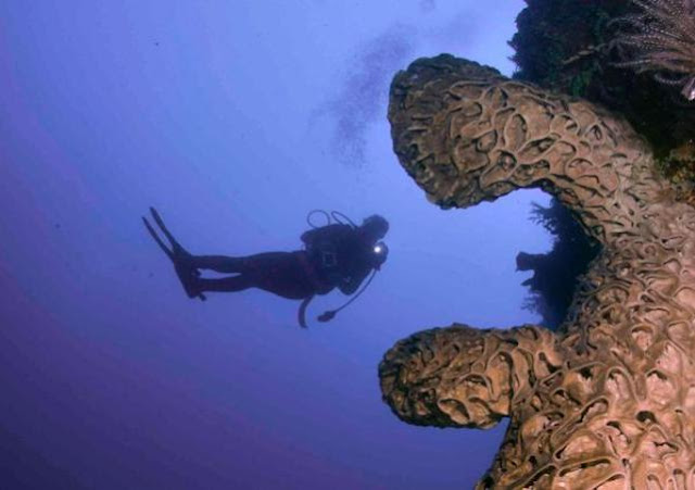 diving gorontalo, paket diving gorontalo