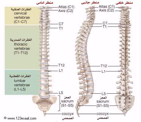 جسم الإنسان: الجهاز العظمي