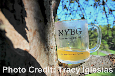 Mug hidden in the tree at Blues, Brews and Botany New York Botanical Garden NYBG Fall 2017, beer, craft beer, beer tasting, beer tasting events new york city