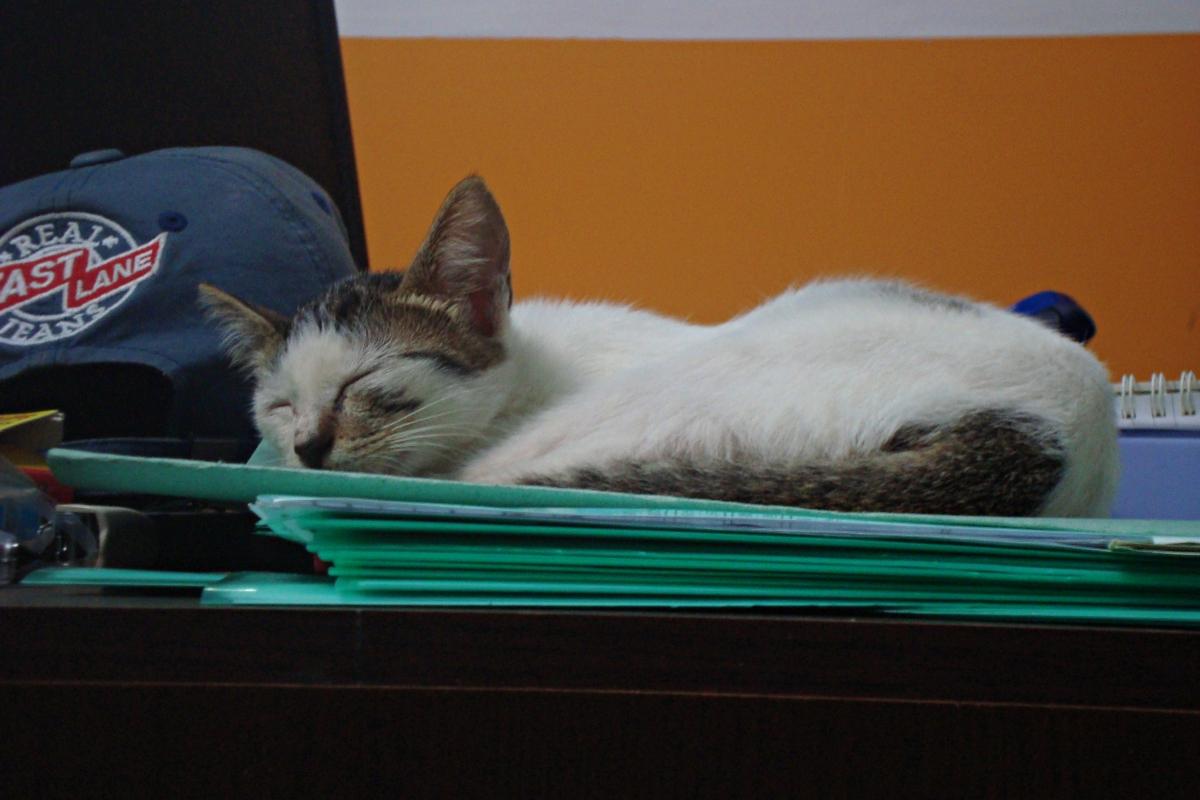 책상에 올라가 자고 있는 고양이