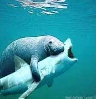 Wendell shark-wrestling