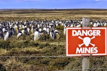 Ladang Ranjau Jadi Habitat Jutaan Penguin