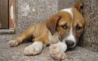 Ο Δήμος Σαρωνικού ενημερώνει τους πολίτες Παράνομη πράξη η κακοποίηση ζώων