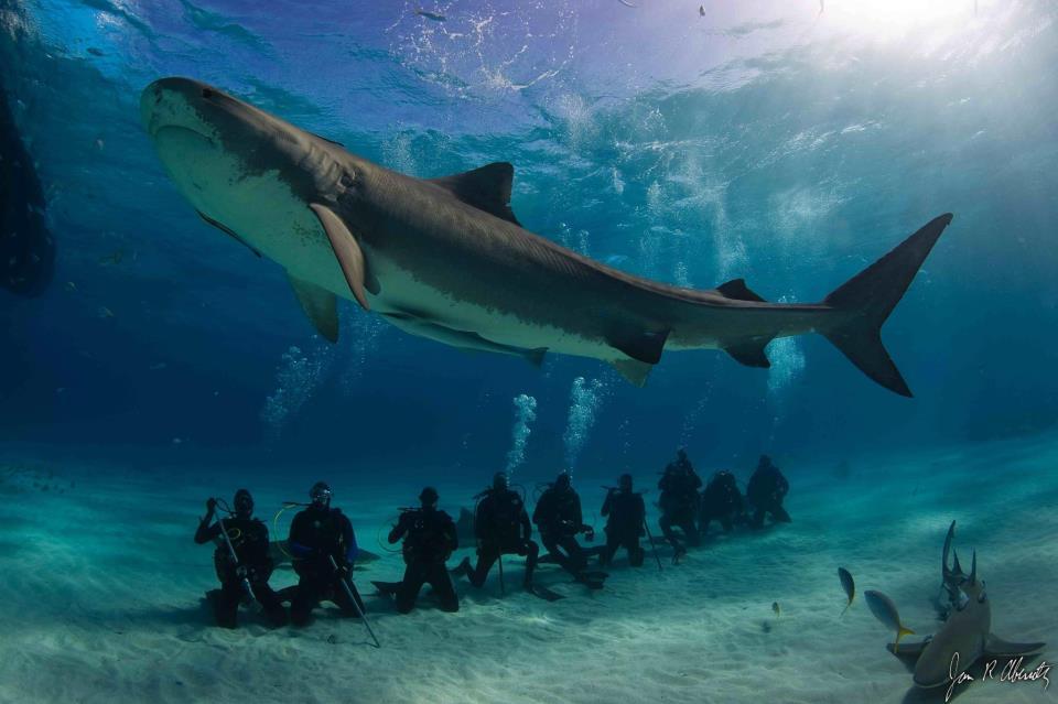 O Livro da Natureza: Tubarão