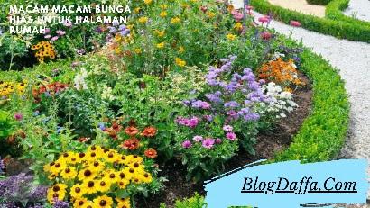 Macam Macam Bunga Cantik untuk Dekorasi Rumah