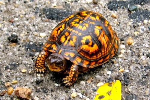 Pet Smart Tortoise Tortoise Library
