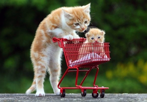 Tiny Shopping Cart
