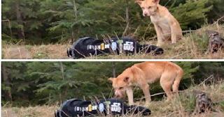 Ένας σκύλος λιμοκτονούσε στο βουνό, μέχρι που είδε ΑΥΤΟ στο πλάι του δρόμου. Η συνέχεια; Θα σας καθηλώσει!