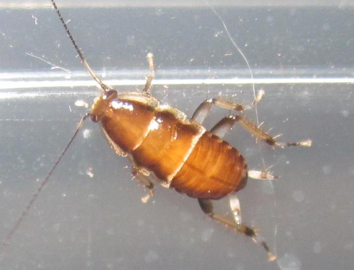 A.methanoides%25233.JPG