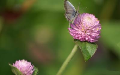 Nice and beautiful flower