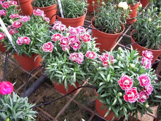Bitkilerde Küflenme Nasıl Geçer?