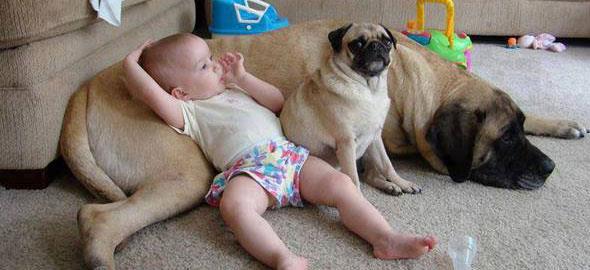 Ραντεβού κοιμισμένα σκυλιά