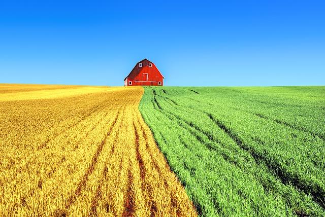 Rincian Biaya Modal Usaha Pertanian Dari Awal Hingga Buka