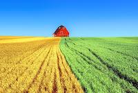 bisnis pertanian, usaha pertanian, modal usaha pertanian, pertanian, sawah,