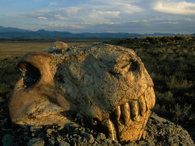 What Caused the World's Greatest Extinction?