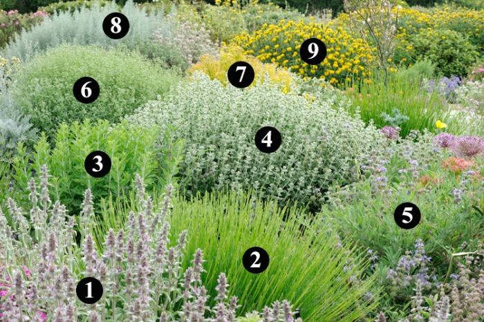 Plantas r sticas y resistentes a la sequ a ii guia de for Jardines que necesitan poca agua