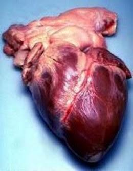 Gambar Jantung Manusia Asli