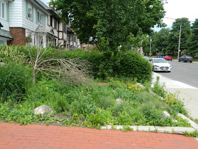 Toronto Midtown Summer Front Garden Cleanup Before by Paul Jung Gardening Services Inc.--a Toronto Gardening Company