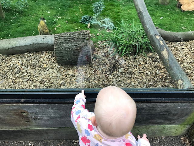 A toddler pointing through glass at a small monkey