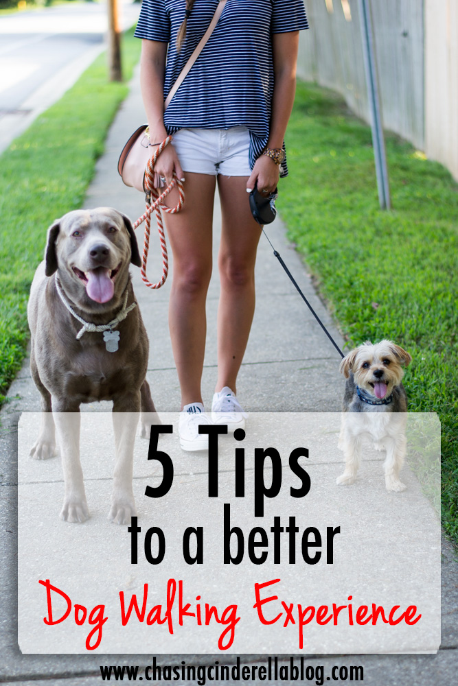 Tips to a better dog walking experience