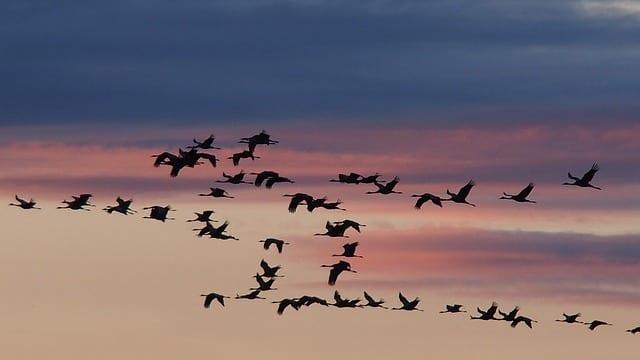 Göçmen Kuşu - sozlerix.com