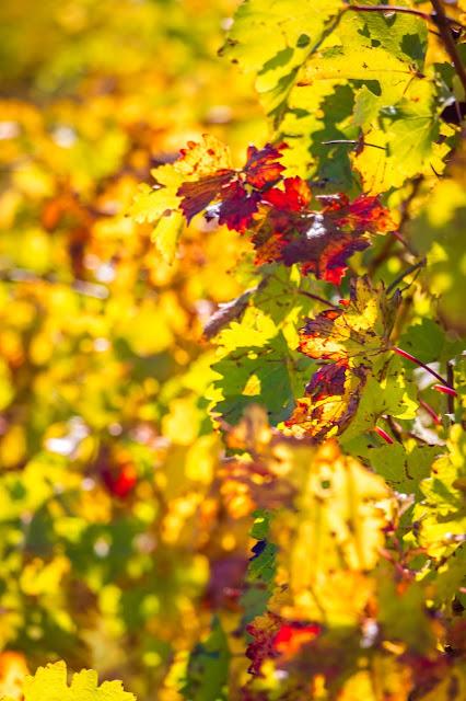 Buscando los colores del otoño