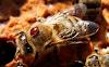 Μυστικά για τη βαρρόα που δεν γνωρίζατε: Πως μπορούμε να έχουμε πεντακάθαρα τα μελίσσια;