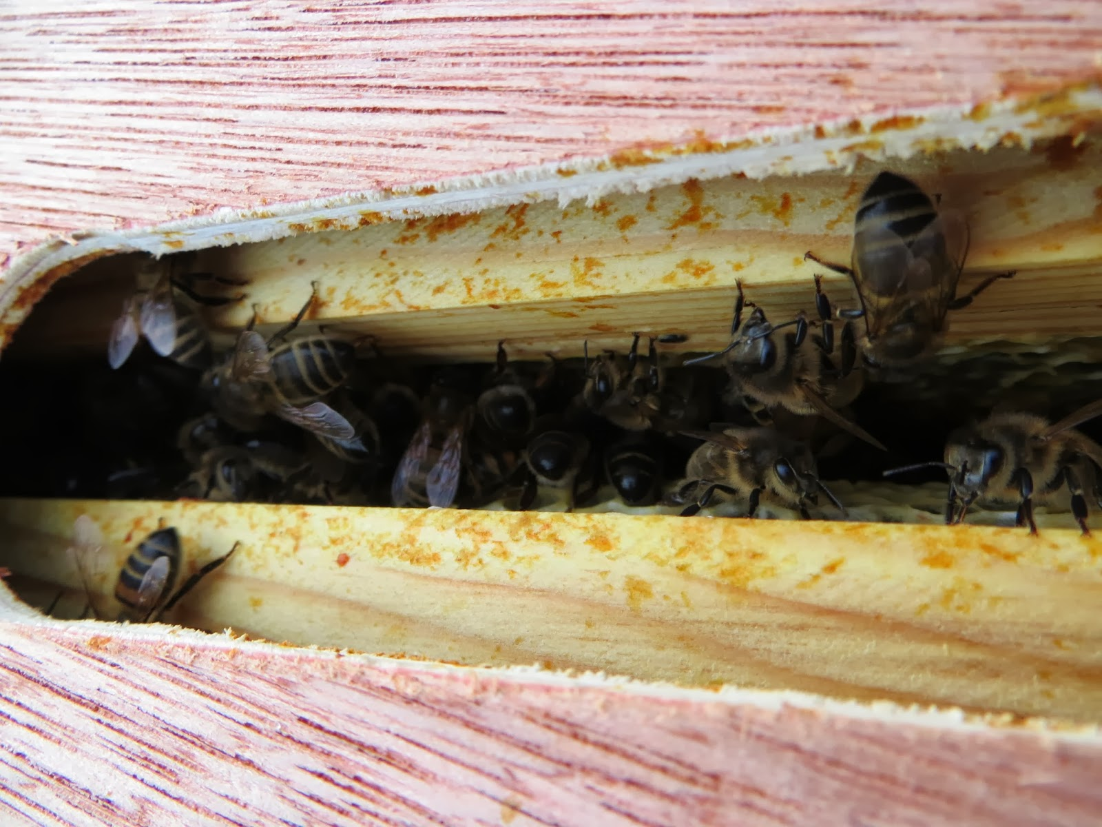 bees in the hive in winter