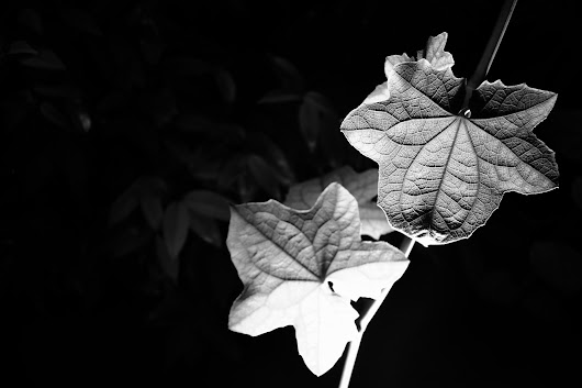InkedLens: THE LEAVES | DAVAO CITY