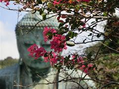 鎌倉大仏とサルスベリ