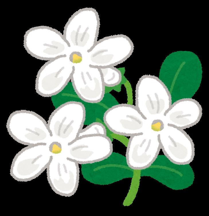 すべての美しい花の画像 Hd限定ジャスミン 花 イラスト フリー