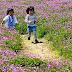 レンゲ畑に散歩道が登場