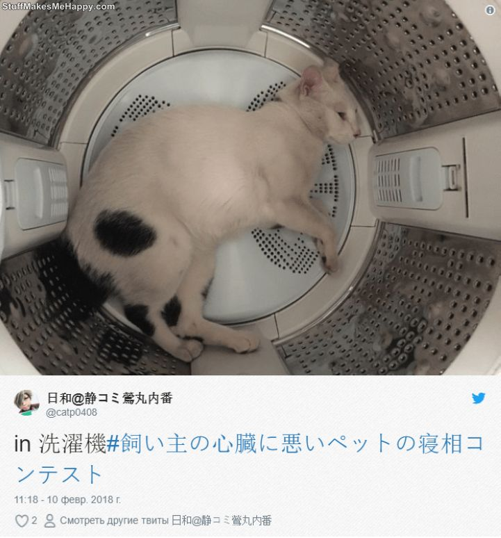Sleeping Animals: These Pets Sleeping Habits Are Creeping Out Their Japanese Owners