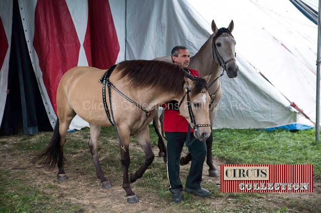 chevaux a la robe dorée sortant de piste