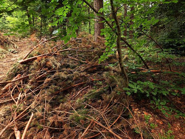 Połamane gałęzie na szlaku