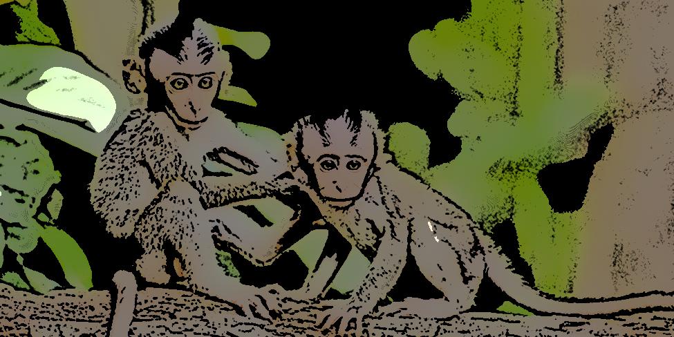 funny short story: monkey business
