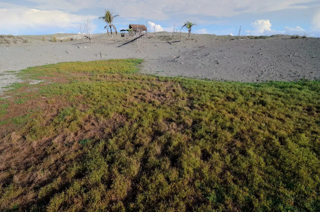 One House on the Hill Culili Point Sand Dunes Paoay Ilocos Norte Philippines