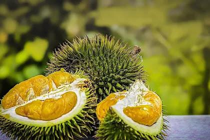 Orang dengan 3 Kondisi Ini Dilarang Makan Durian