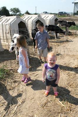 New Day Dairy, Clarksville, Iowa Baby Calves