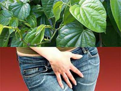 Image Menghilangkan keputihan yang gatal dan bau