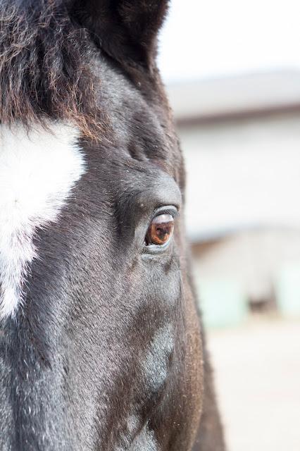 Cavallo-Agriturismo il Giglio a Massama