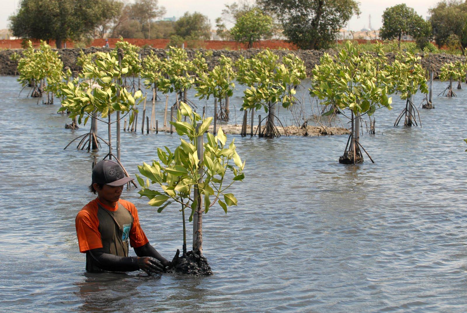 EKOLOGI RESTORASI SEBAGAI DASAR PERBAIKAN EKOSISTEM PADA KAWASAN KONSERVASI DI INDONESIA
