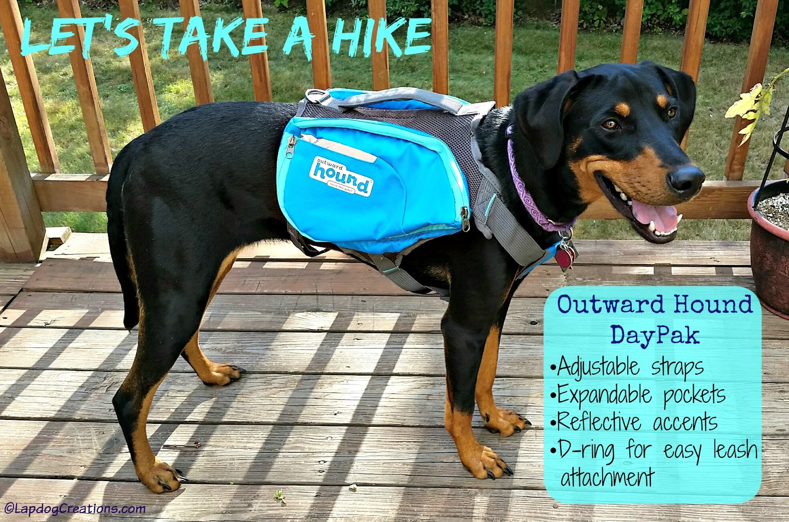 Watch How to Hike with Your Hound video