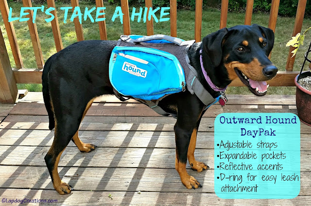 Doberman Puppy wearing a dog backpack