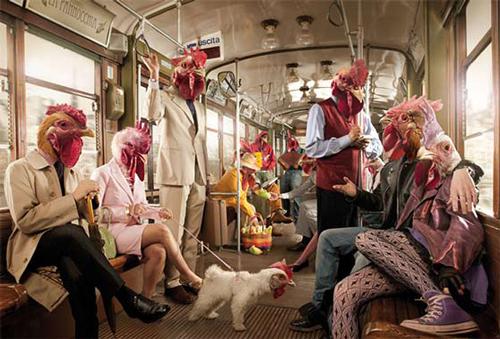 manipulasi kepala ayam